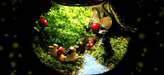 创意DIY苔藓微景观植物盆栽 送女友闺蜜元旦新年创意礼物